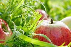 Appelen in een tuin op een groen gras Royalty-vrije Stock Foto's