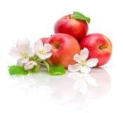 Appelen en appelbloemen Stock Afbeelding