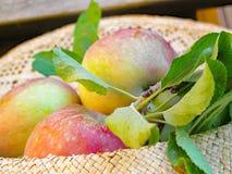 Appelen en bladeren stock foto's