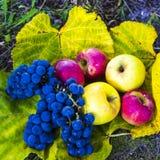 Appelen en druiven royalty-vrije stock afbeeldingen