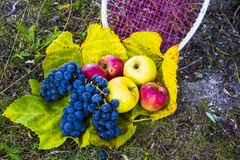 Appelen en druiven stock foto's