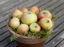 Appelen en gras Stock Afbeeldingen
