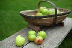 appelen royalty-vrije stock afbeeldingen