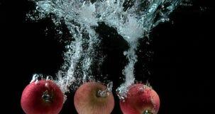 Appelen, malusdomestica die, Vruchten Water ingaan tegen Zwarte Achtergrond, stock videobeelden