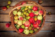 Appelen in mand Stock Afbeelding