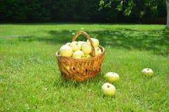 Appelen, mand, de zomer, gras, vitaminen, vruchten royalty-vrije stock afbeelding