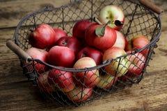 Appelen in mand stock foto