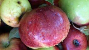 Appelen met groene en rode schil Royalty-vrije Stock Afbeeldingen