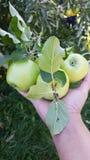 Appelen in mijn hand stock afbeeldingen