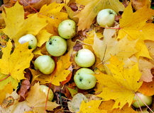 Appelen op esdoornbladeren Royalty-vrije Stock Foto