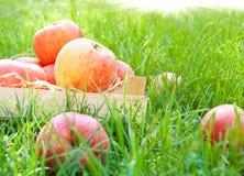 Appelen op gras Stock Afbeelding
