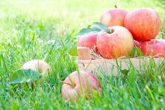 Appelen op gras Stock Foto