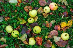 Appelen op het gras Stock Fotografie
