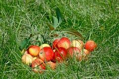 Appelen op het gras stock foto