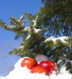 Appelen in sneeuw Royalty-vrije Stock Foto's