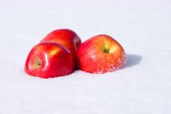 Appelen in sneeuw Stock Fotografie