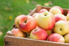 Appels в клети Стоковые Фотографии RF
