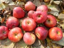 appels Стоковое фото RF