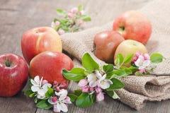 Appelsap en appelen Stock Fotografie