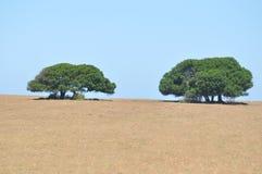 Appena alberi fotografia stock
