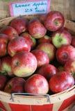 Appena mele selezionate in cestino Fotografia Stock