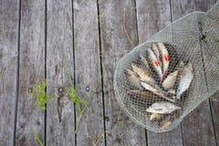 Appena pesce catched del fiume nella gabbia di pesca sul backgr di legno fotografia stock