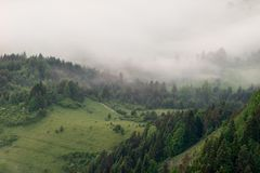 Appena prima l'alba la foresta ? coperta di nebbia spessa immagine stock