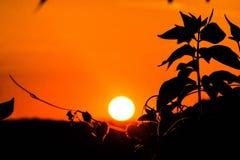 Appena un tramonto Immagine Stock