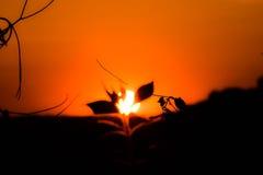 Appena un tramonto Fotografie Stock Libere da Diritti