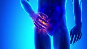 Appendix pain - 4K resolution vector illustration