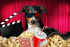 Appenzeller dog watching a movie in a cinema theater, with soda and popcorn wearing 3d glasses royalty free stock photo