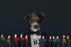Appenzeller Sennenhund Pies stoi w parku na wiośnie Portret Appenzeller góry pies fotografia royalty free