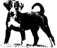 Appenzeller szczeniak - ilustracja Zdjęcia Stock