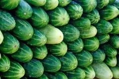 Appetitanregende schmackhafte grüne Gurke der Verfassung Lizenzfreie Stockbilder