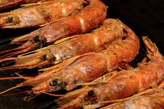 Appetizer for beer large red shrimps argentine in chitin one-piece set lies on grill raw stage cooking sea food menu background stock photo
