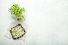 Appetizer with black whole wheat bread on a paper substrate, a bundle of micro green nearby. Empty space for text.  stock photography