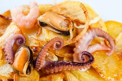 Appetizer of cuttlefish octopus, mussels, shrimp and fried potatoes. Macro view. Appetizer of cuttlefish octopus, mussels, shrimp and fried potatoes. Macro view Royalty Free Stock Photos