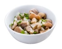 Appetizer from the pickled mushrooms stock photo