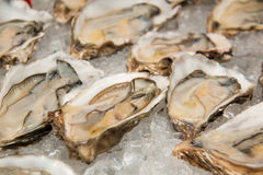 Appetizer Raw oysters on ice  Display. A appetizer Raw oysters on ice  Display Royalty Free Stock Photo