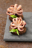 appetizer small marinated octopus (squid) with basil Royalty Free Stock Photography