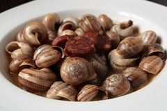 Appetizer of snails in sauce Royalty Free Stock Image