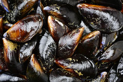 Istanbul Mussels Stock Photo - Image: 39946619