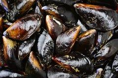Appetizer stuffed mussels Stock Photo