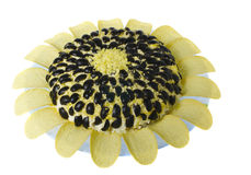 Appetizer sunflower isolated  Royalty Free Stock Photo