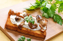 Appetizer :toast with mushrooms Royalty Free Stock Images