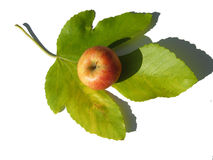 An appetizing apple Royalty Free Stock Photography