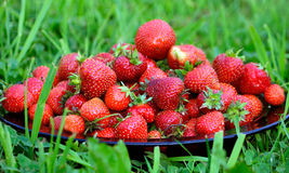 Appetizing fresh strawberries. On a plate on the green grass Royalty Free Stock Photos