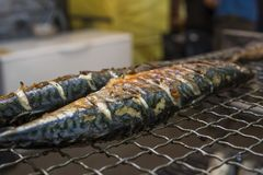 Appetizing mackerel grilled on a fest food. Steet food. royalty free stock photo