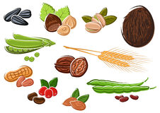Appetizing nuts, beans, seeds and wheat Royalty Free Stock Images