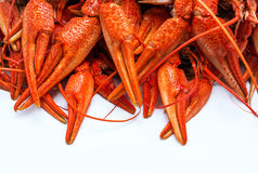 Appetizing red crawfish. Appetizing red boiled crawfish on a white background Royalty Free Stock Photography